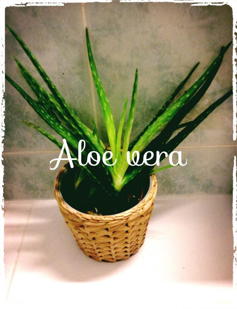 Le gel d'Aloe Vera: une gorgée d'éléments nutritifs pour la peau