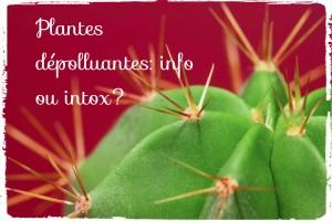 Plantes dépolluantes: un effet marketing?