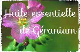 L'huile essentielle de Géranium: amie des peaux acnéiques