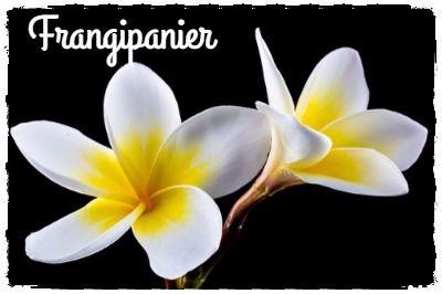 La fleur de frangipanier: une odeur de paradis