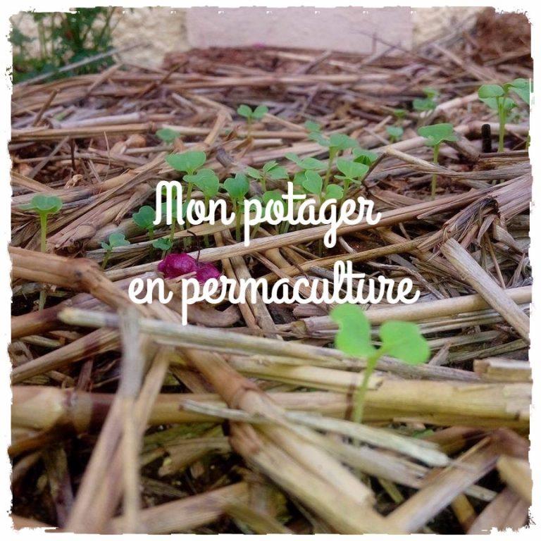 Mon potager en permaculture: astuces pour jardiniers novices