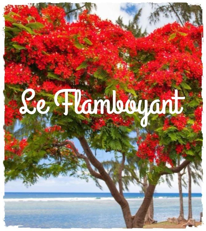 Le flamboyant: l'arbre de Noël mauricien
