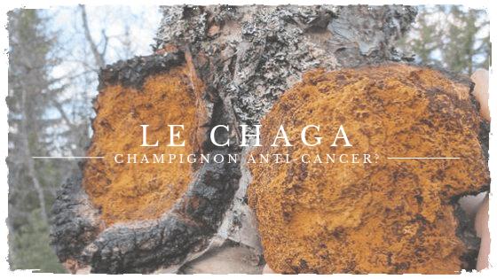 Protégé: Le chaga: un champignon aux propriétés prometteuses