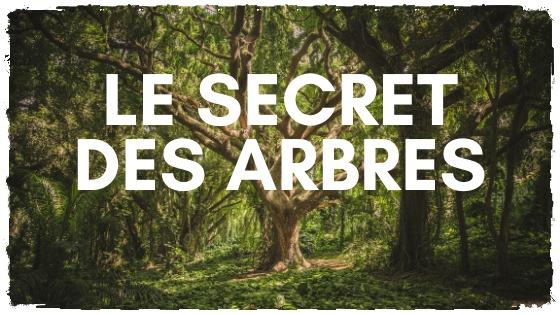 Les arbres ont un secret à vous dire
