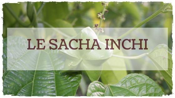 L'huile des incas: le Sacha Inchi