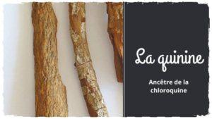 La quinine, l'ancêtre de la chloroquine