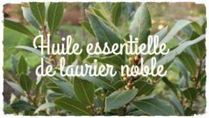 L'huile essentielle anti burn-out: le laurier noble