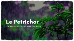 Partez en forêt profiter du Petrichor après la pluie
